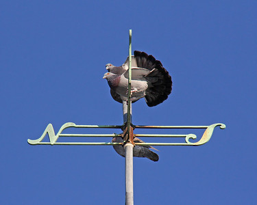 Weather Vane at Planting Fields Arboretum