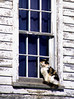 Cat in the Window