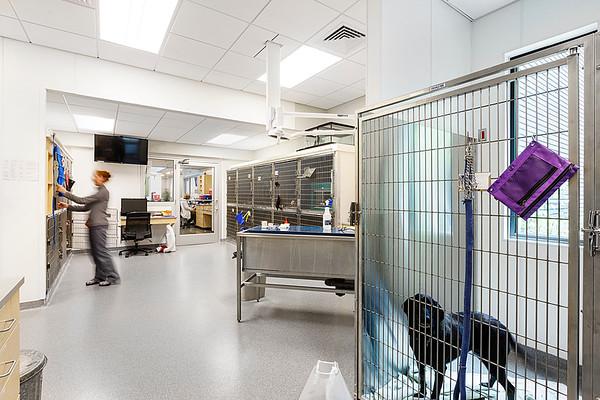Bulger Vet Hospital