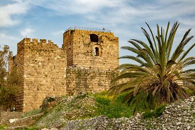 Castle Palm