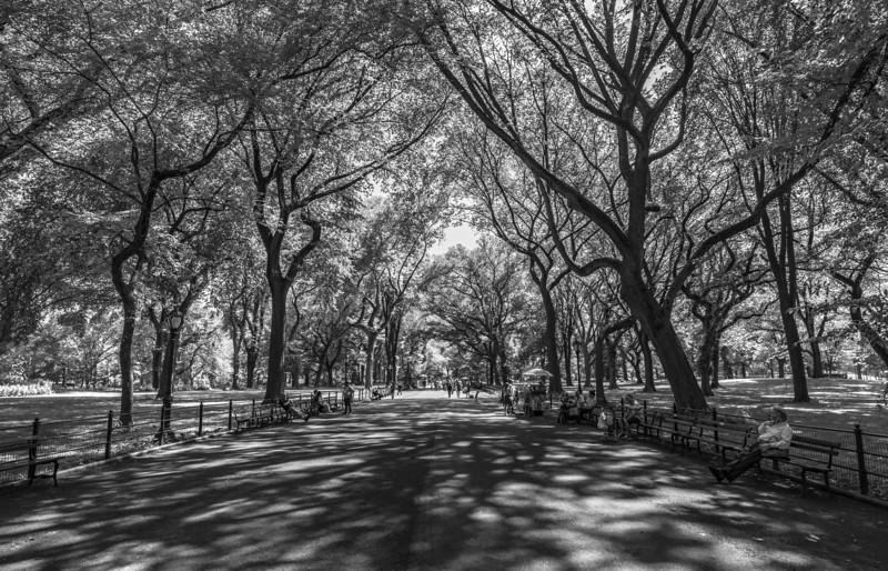 Central Park, New York City 6/28/18