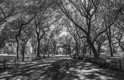 Central Park, New York City 6/28/18