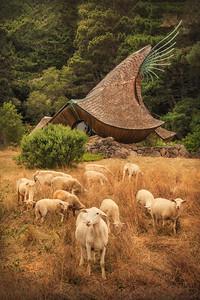 Sheep & Sea Ranch Chapel