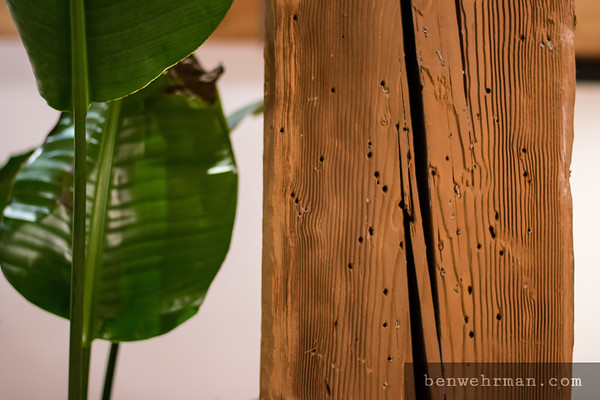 Houseplant and wood