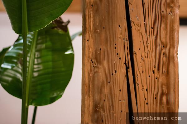 Houseplant and wood
