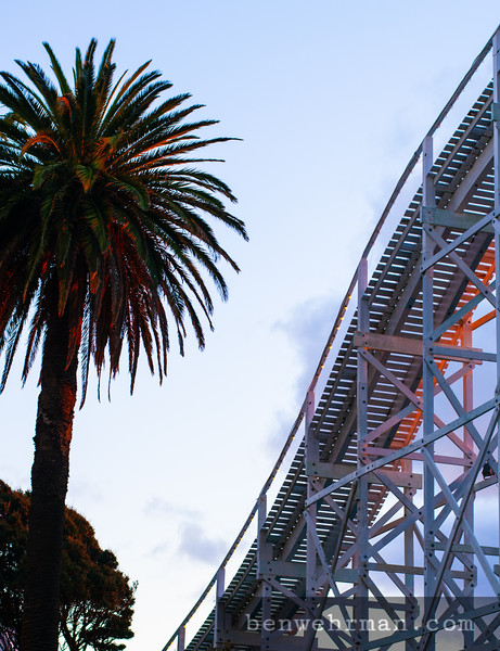Palm tree and roller coaster