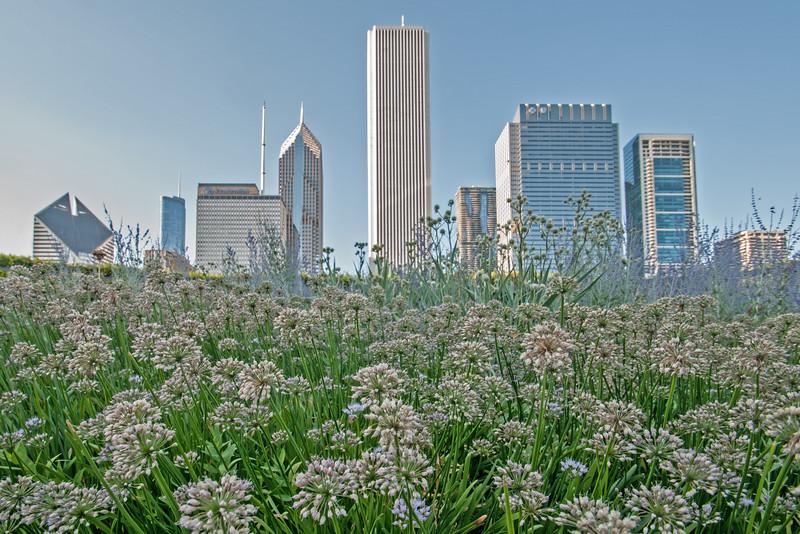 Chicago from Millennium Park
