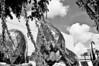 Dali wish tree clouds
