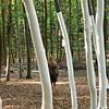 Bessungen, Internationaler Waldkunstpfad