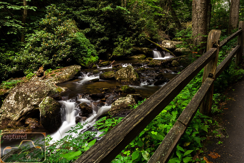 Anna Ruby Falls Trail 3