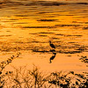 Sillouette Heron