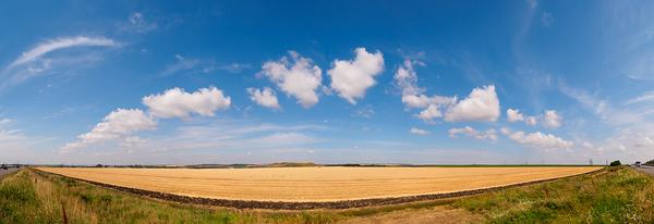 Russian field