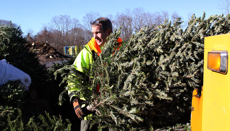 Scott Frary, Nahant DPW, adds more old Christmas trees to the pile. Photo by Owen O'Rourke