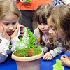 """From left, Regina Maes, 8, Hazel Pericola, 3, and Keira Devene, 7, check out the carrots during the Saugus Garden Club's monthly """"Plantastic"""" event at the Saugus Public Library on Tuesday, October 9. Item Photo / Angela Owens."""
