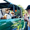 "Swampscott. ""Classics By the Sea"" car show.  Monument Ave.<br /> Noah  Kolodziejski of Swampscott, who brought his 1974 Ford Bronco to the show, grabs a quick hamburger under the vigilant eyes of the three dogs he brought along: ""Bacon"", ""Bonecrusher"", ""and ""Charlie"""