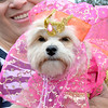 "Lynn, Barkland Dog Park, Halloween dog costume contest. ""Chanel"" owned by Lisa Brinkley came to the contest as a belly dancer."