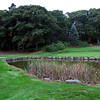 The pond at Gannon Golf Course on Friday, October 4. Item Photo / Angela Owens.