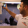 John Mallace, owner of Pet Express in Lynn, Danvers and the Square One Mall in Saugus, uses a smart phone to get the specifics on the dogs for sale in at the Square One Mall on Black Friday. Photo by owen O'Rourke