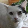 Phyllis Amaral's cat Sissy. Photo by Owen O'Rourke