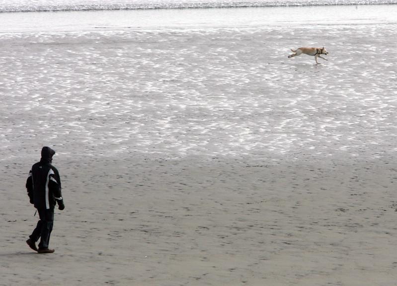 A man watches as his dog runs on the Lynn waterfront Monday February 8, 2010. Item Photo/ Reba M. Saldanha
