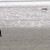 A man watches as his dog runs on the Lynn waterfront Monday February 8, 2010. Item Photo/ Reba M. Saldanha