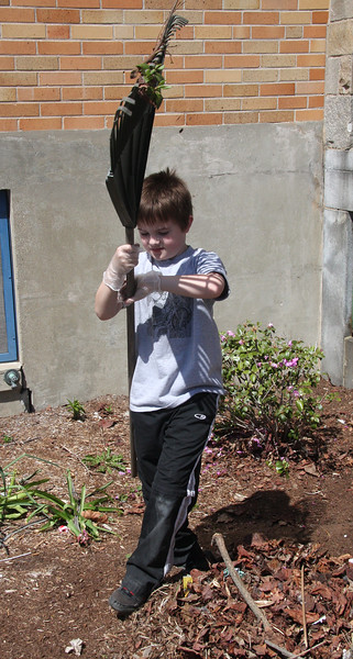 Clean up day at the Callahan School in Lynn. Zachary McKenna works the garden in front of the school.