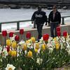 A pair walks by flowers in full bloom along the Lynn waterfront Monday April 26, 2010. Item Photo/ Reba M. Saldanha