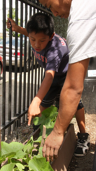 David Mendez shows Nick Chum a plant that needs a stake. International Garden at Ford School