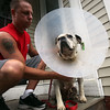 David Pandolfo and his dog Lucy  at their Lynn home after she was attacked by three pitbulls at Flax Pond recently. Item Photo/ Reba M. Saldanha