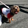 A happy pup at the Grant Road annual Pet Walk Monday July 5, 2010. Item Photo/ Reba M. Saldanha