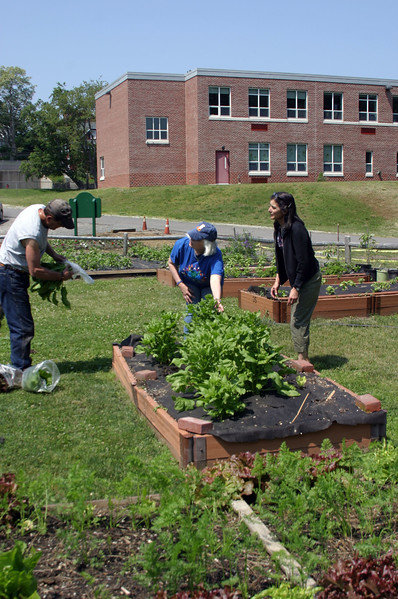 (from left) Paul Caira, Elaine Caira, and Johnson School art teacher Susan Beebe work on the Nahant Community Garden behind the Johnson School Thursday June 16, 2011. Item Photo/ Cyrus Moulton