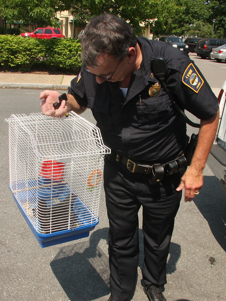Kevin Farnsworth with the chicken he got on Linden Street in Lynn today.