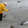 Susan Spooner-Turner photographs the dead fish on the beach on the Swampscott/Lynn line.