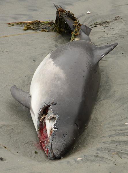 Dead fish on the beach, Lynn/Swampscott line.