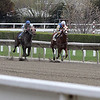 The first race on opening day at Suffolk Downs in the final stretch with the winner Chasing Grey in the lead. Photo by Owen O'Rourke