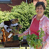 Marilyn Carlson, a member of the Saugus Historical Commission, carries home a tomato plant and a pot of basil.