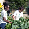 Adesuwa Usuanlele, 16, left, and Tommy O'Connor, 15, walk through the Food Project's Munroe Street garden as they talk about their experience with the Summer Youth Program, on Friday, September 21. O'Connor and Usuanlele both continue to work for the Food Project through their Academic Year Program. Item Photo / Angela Owens.