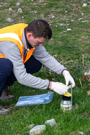 Intern with Manaaki Whenua Florian Chazottier collects flies from a trap set at groundzero, in Glentanner on the South Island, where the RHDV1 K5 virus was released.  The flies are then tested to see if they can or are carrying the virus and how far they could spread it.