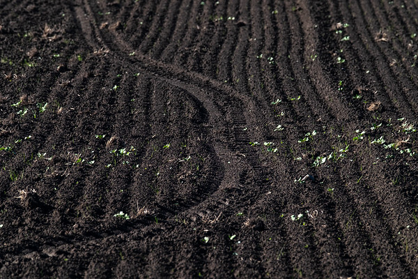 Soil on a farm on Springs Road