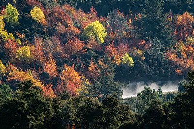 A car picks up dust as it drives along a forest road in Hanmer during autumn.