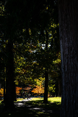 Various trees and fauna around Hanmer forests in autumn.