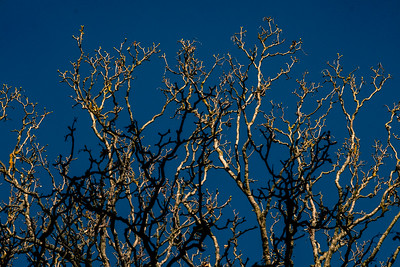 Bare branches lit by the early sun