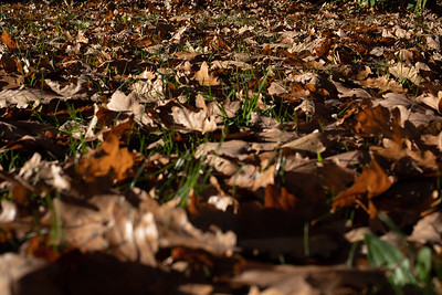 Leaves on the ground during Autumn in Lincoln.