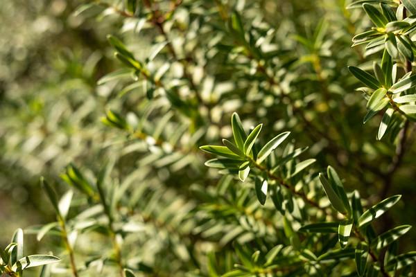 Small green bush in Lincoln.