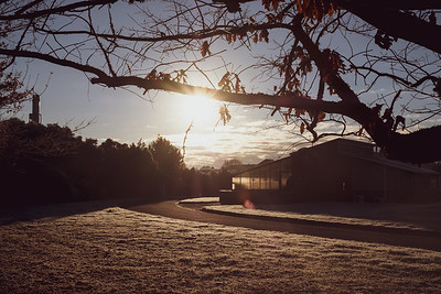 Frosty autumn scene in Lincoln, New Zealand.  Image by Bradley White
