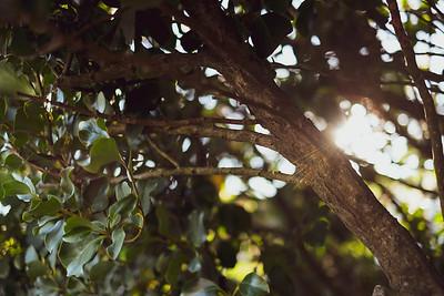 sunflare through trees