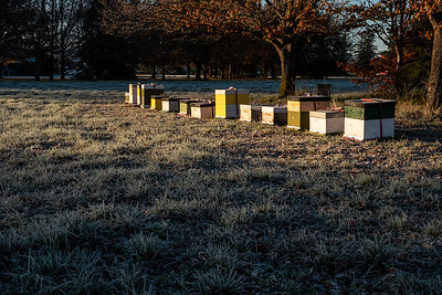 Autumn scene with frost near beehives in Lincoln, New Zealand.