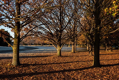 Autum scene with frost at Plant and Food site, Lincoln