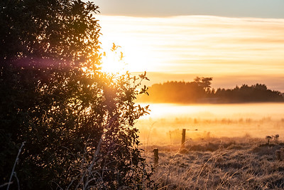 Fields covered in frost with fog near Bluff Highway, Awarua Plains.