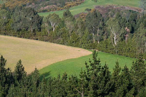 Mixed land use near Port Chalmers in the South Island.